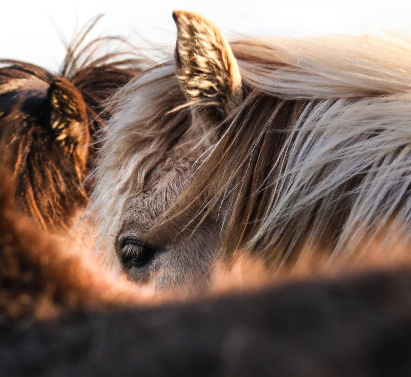 Trixi Ferienpark Zittauer Gebirge Tierfreunde Streichelgehege Tiere