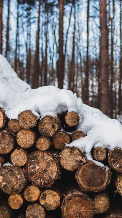winterurlaub-winterspaziergang-trixi-ferienpark